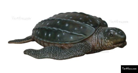 Leatherback turtle the kids