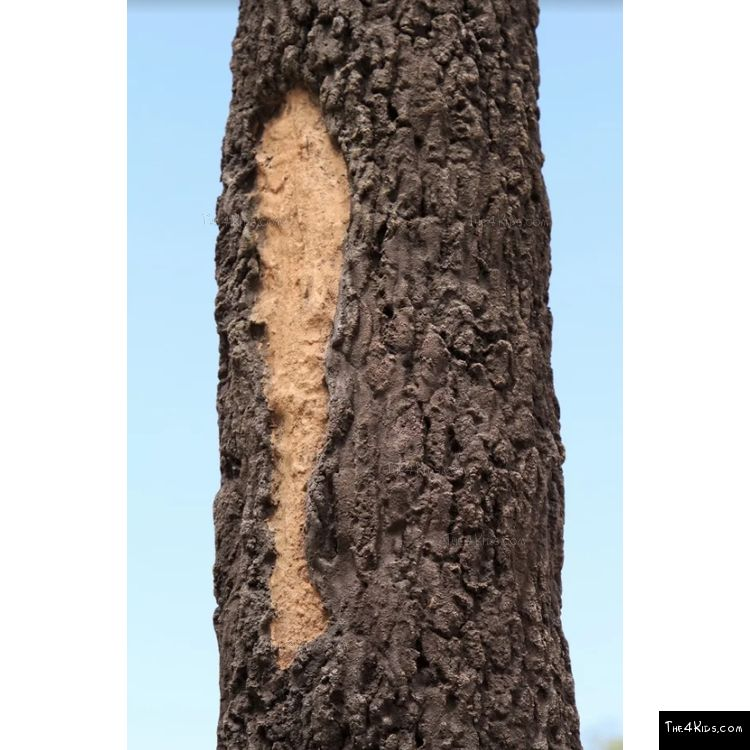 Image of GFRC Tree Texture