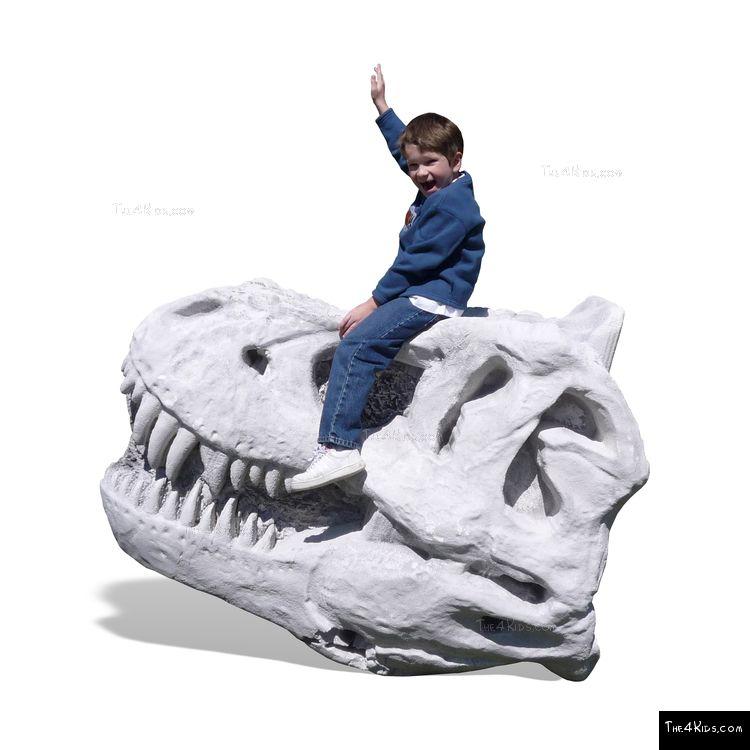 Image of DinoBonz T-Rex Skull Climber