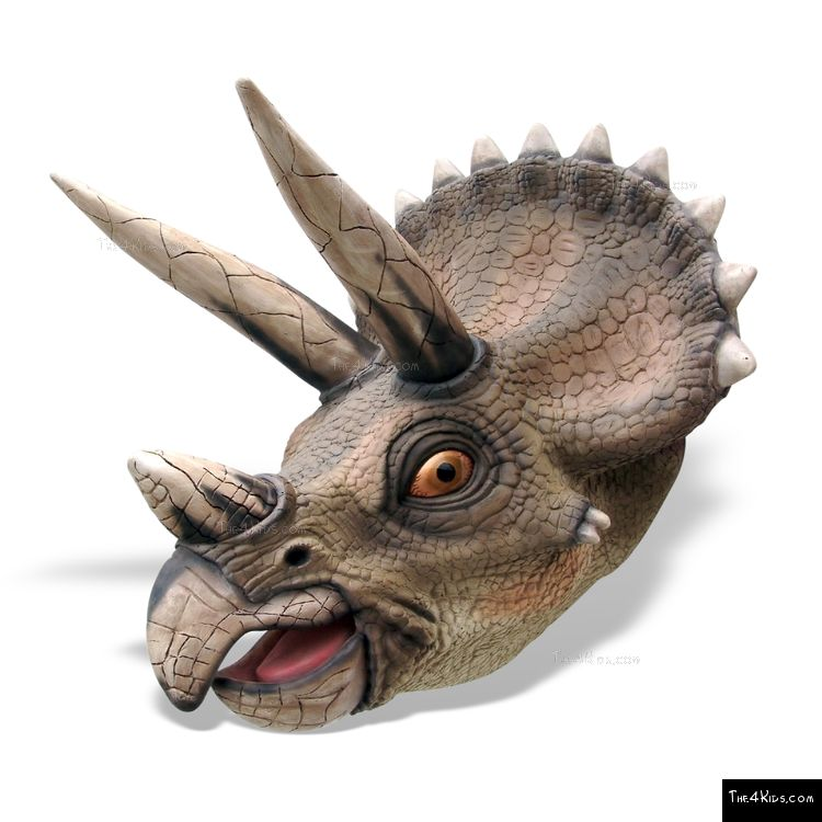 Image of Triceratops Head
