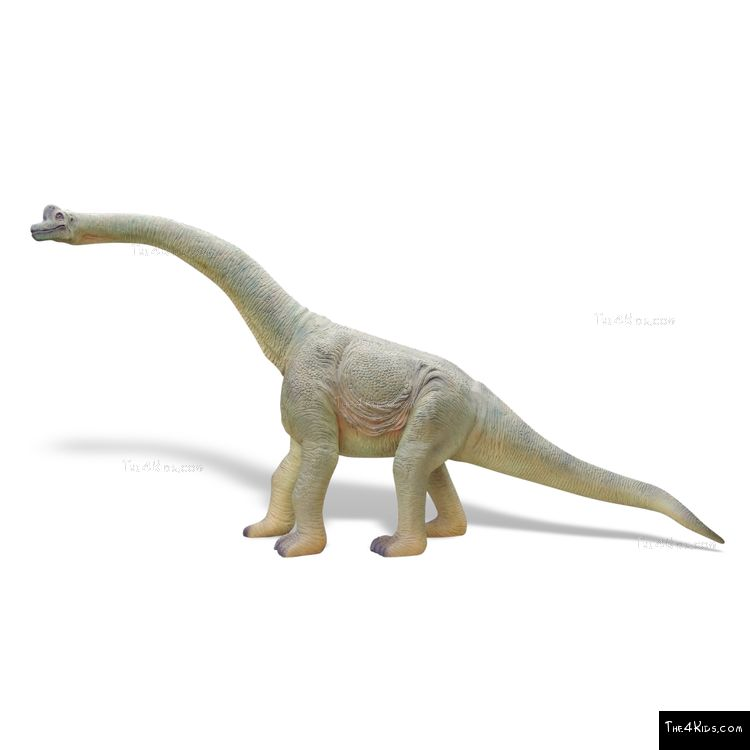 Image of 8ft Baby Brachiosaurus