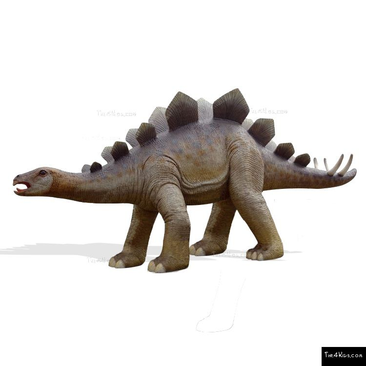 Image of Adult Stegosaurus