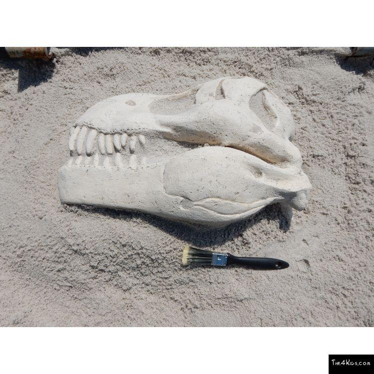 Image of T-Rex Skull Fossil