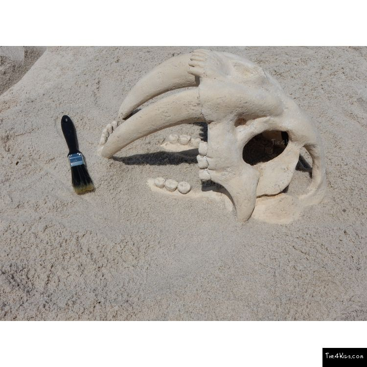 Image of Saber Tooth Fossil Skull