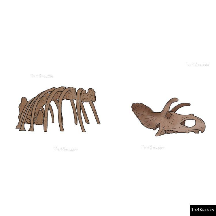 Image of Triceratops Bones Climber