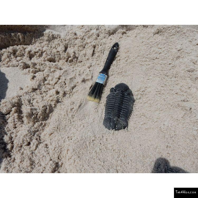 Image of Trilobite Fossil