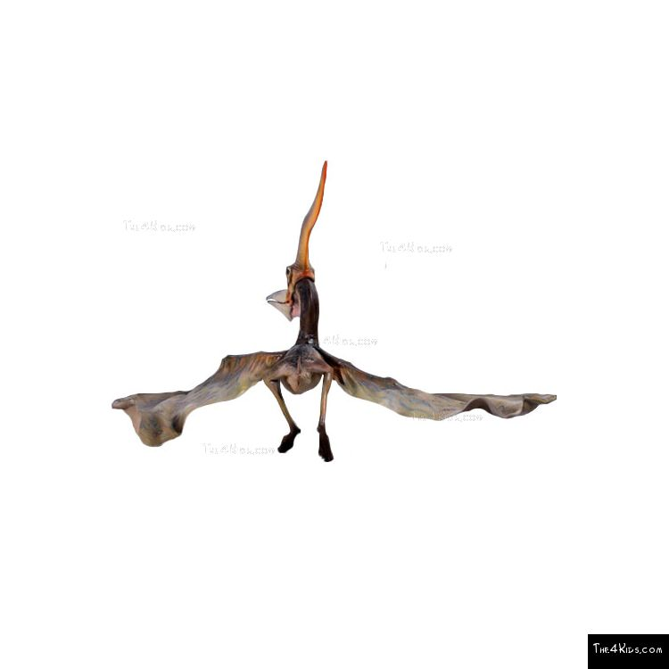 Image of Pteranodon