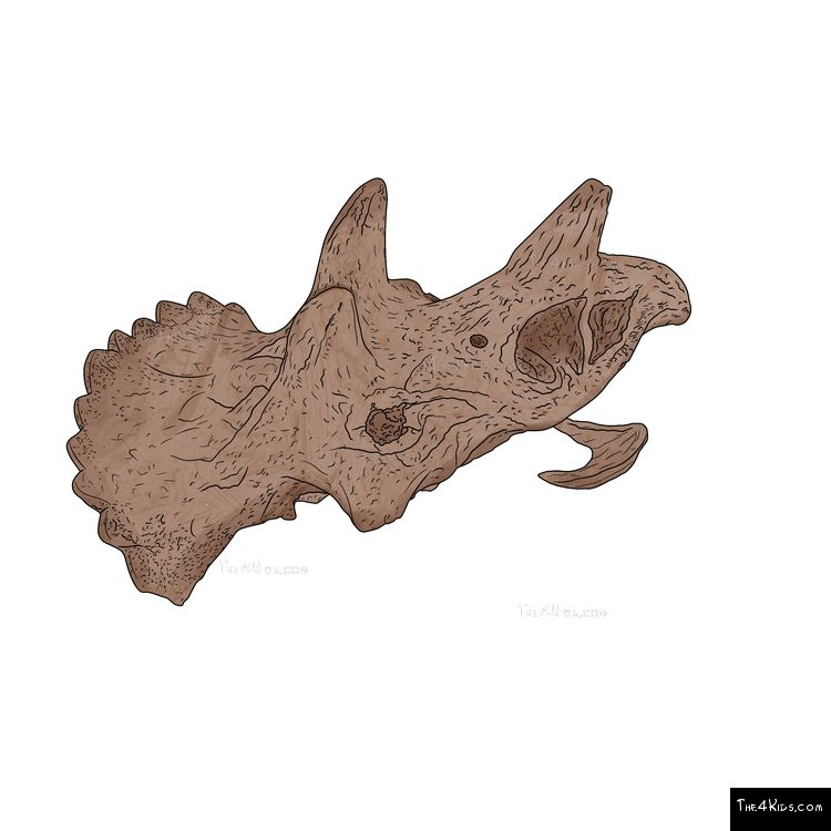 Image of Large Triceratops Skull Fossil