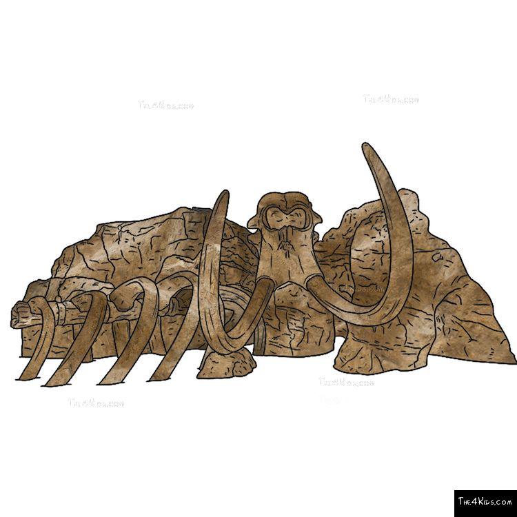 Image of Mammoth Skeleton Climber