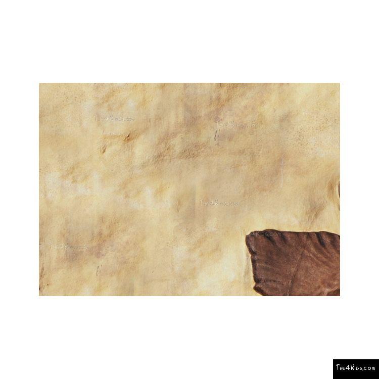 Image of Parasaurolophus Fossil Dig