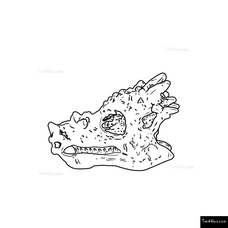 Image of Dragon Head Fossil Dig