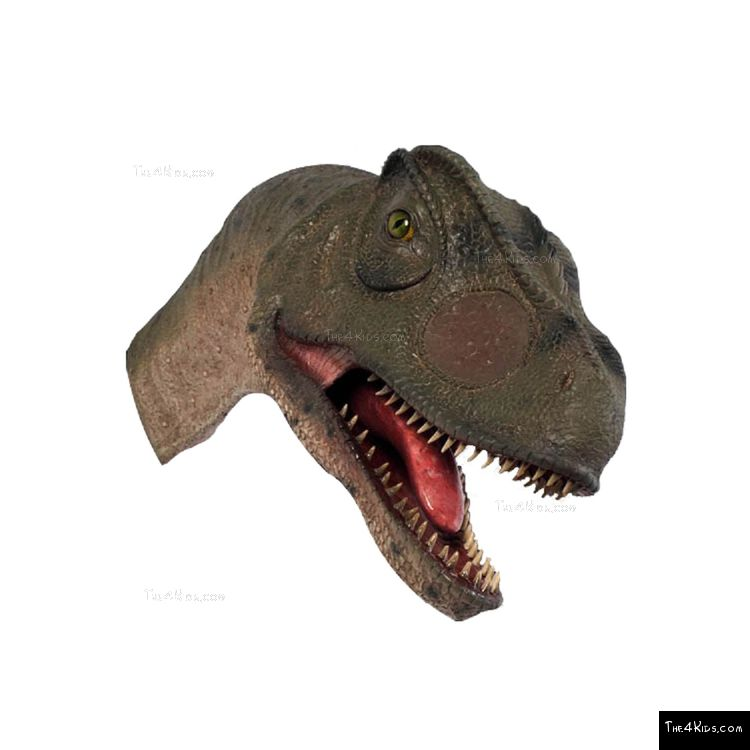 Image of Allosaurus Head w/Mouth Open