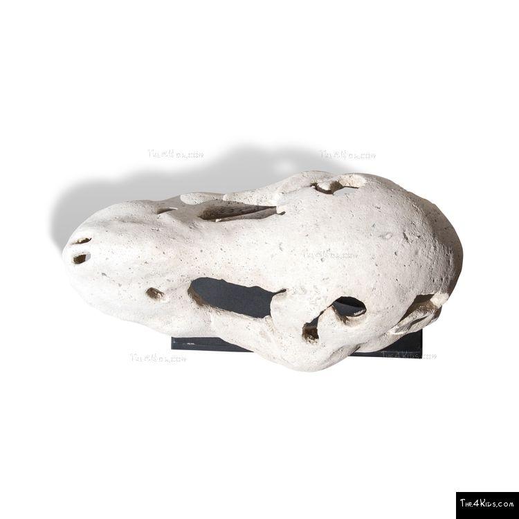 Image of Saber Toothed Tiger Skull on Base