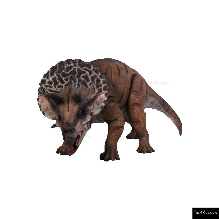 Image of Definitive Triceratops