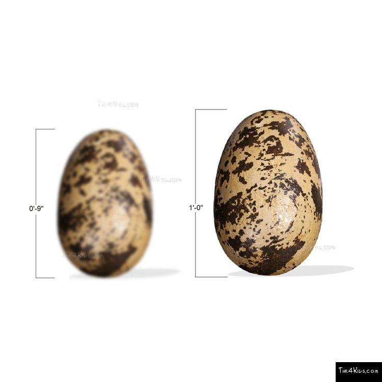 Image of Theropod Egg