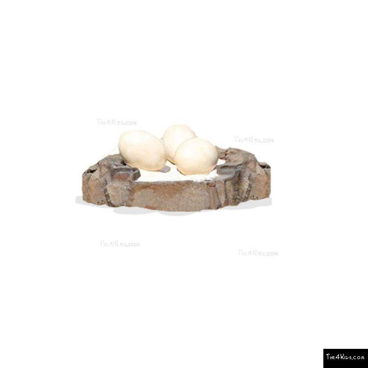 Image of Sauropod Egg