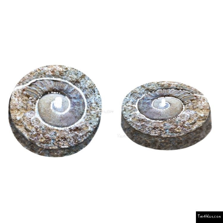 Image of Nautilus Stone Bubbler