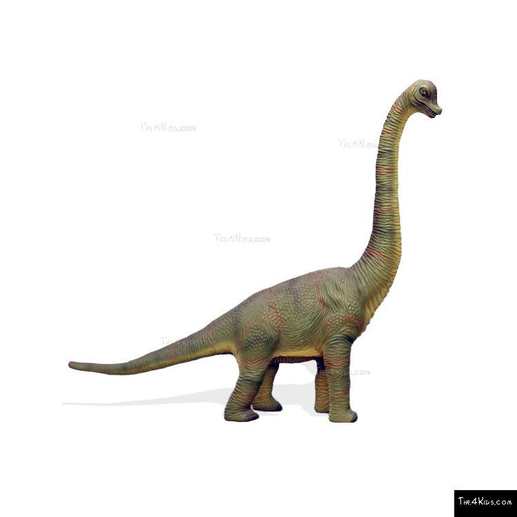 Image of 7ft Baby Brachiosaurus