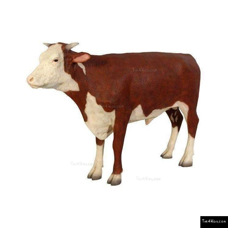 Image of Hereford Steer