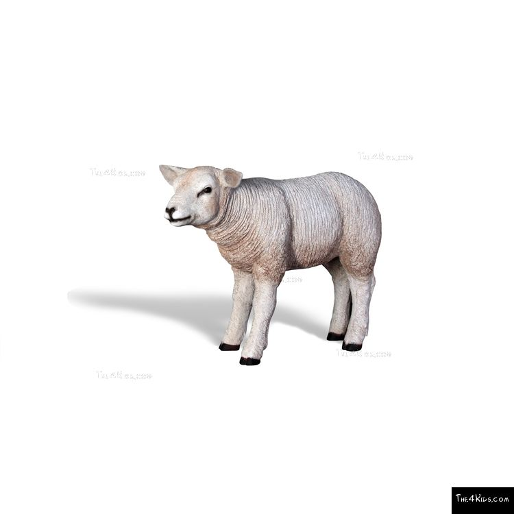 Image of Lamb