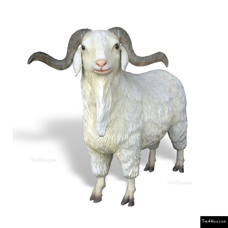 Image of Angora Goat