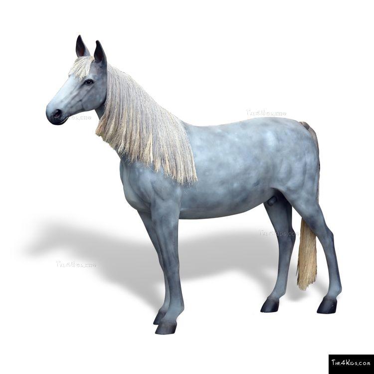 Image of Appaloosa Horse
