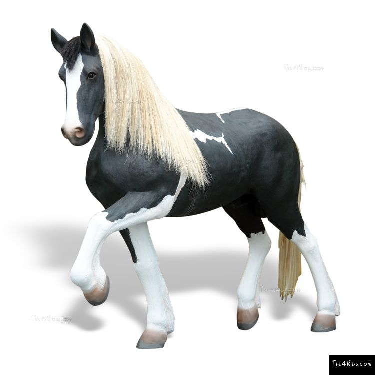 Image of Pinto Horse