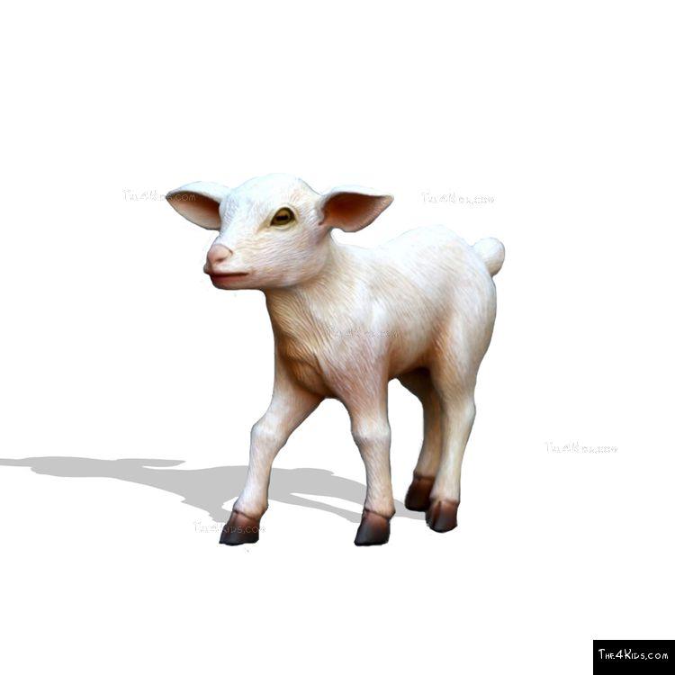 Image of Baby Goat Walking
