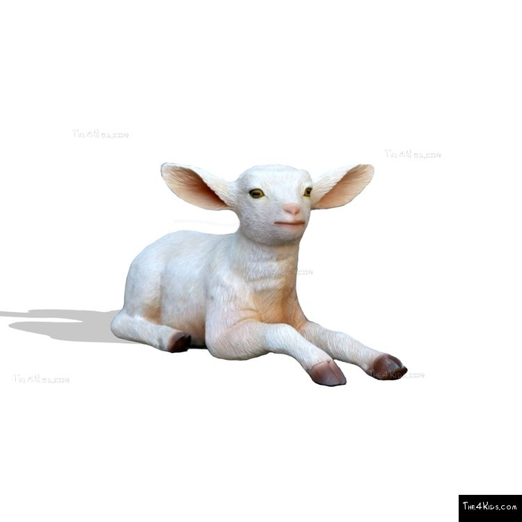 Image of Baby Goat - Lying Down
