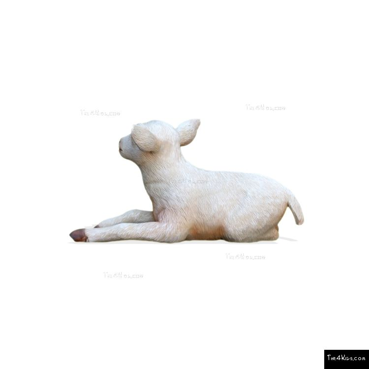 Image of Baby Goat Lying Down