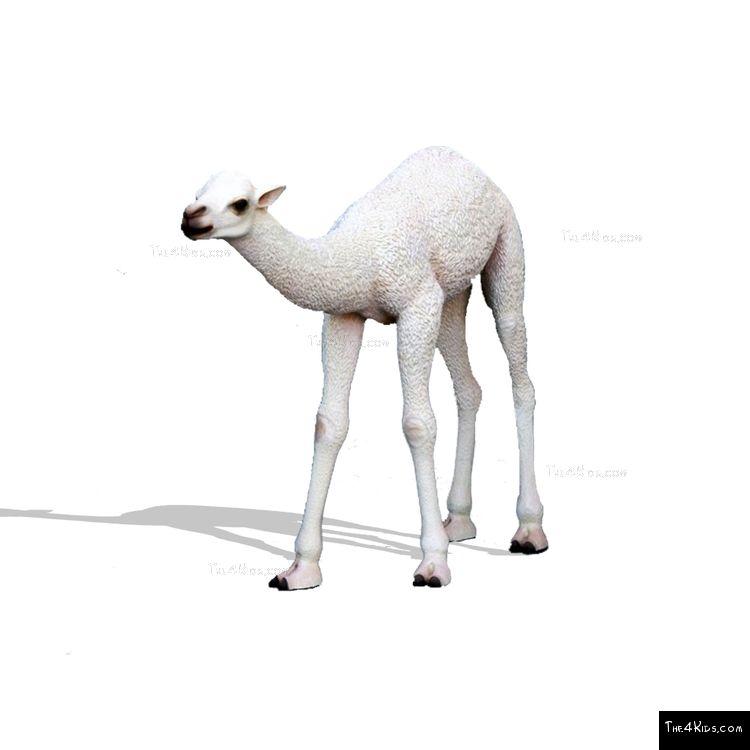 Image of Baby White Camel