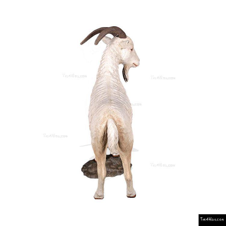 Image of Mountain Goat on Rock