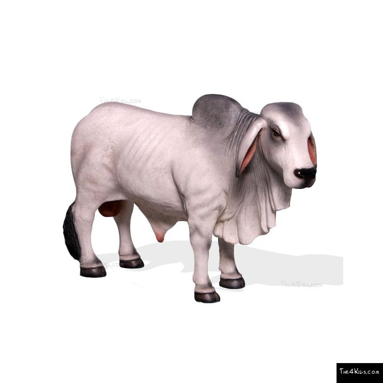 Image of Small Brahman Bull Grey
