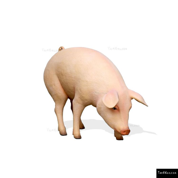 Image of Grazing Pig
