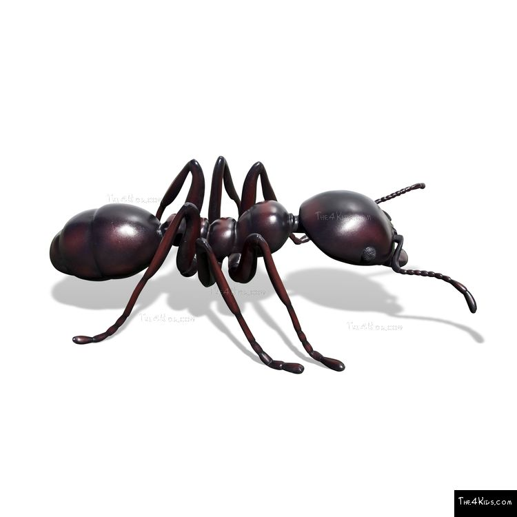 Image of Ant Sculpture