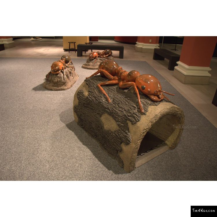 Image of Ant Log Crawler