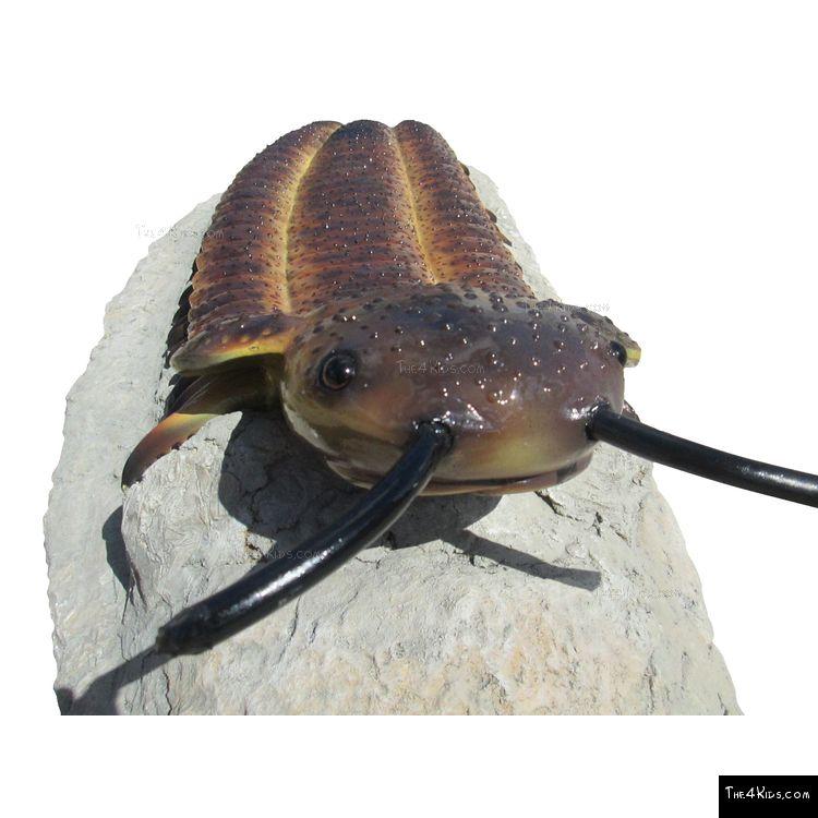 Image of Ant Log Crawler