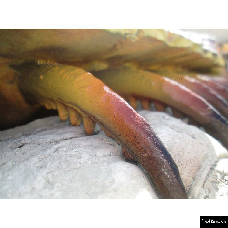 Image of Centipede Climber