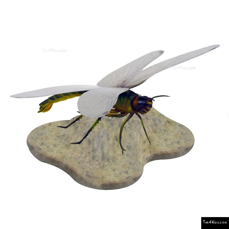 Image of Dragonfly on Rock