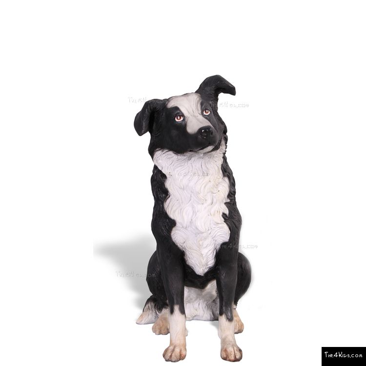 Image of Border Collie Sitting