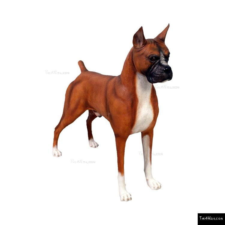 Image of Boxer 1