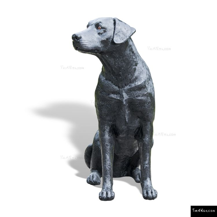 Image of Labrador Sitting