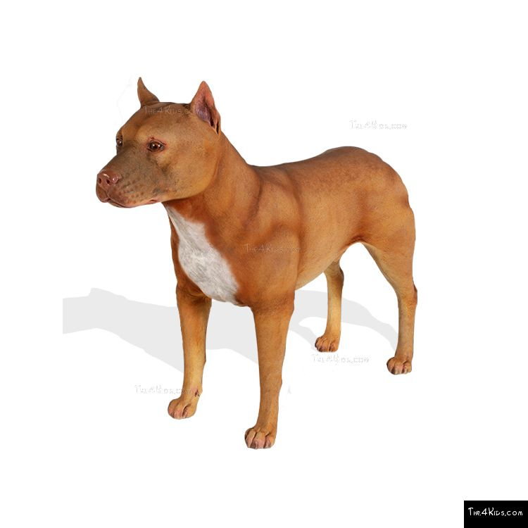 Image of Pitbull