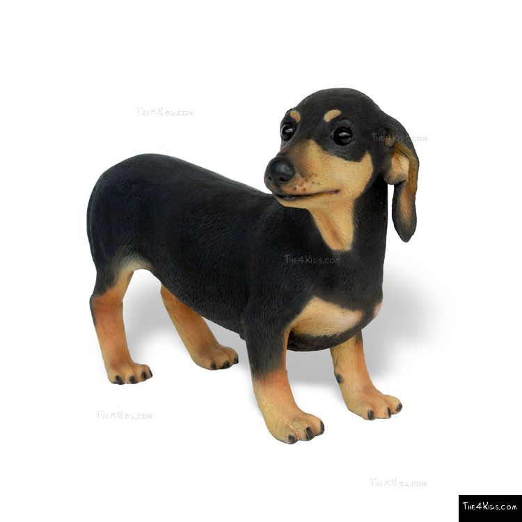 Image of Dachshund
