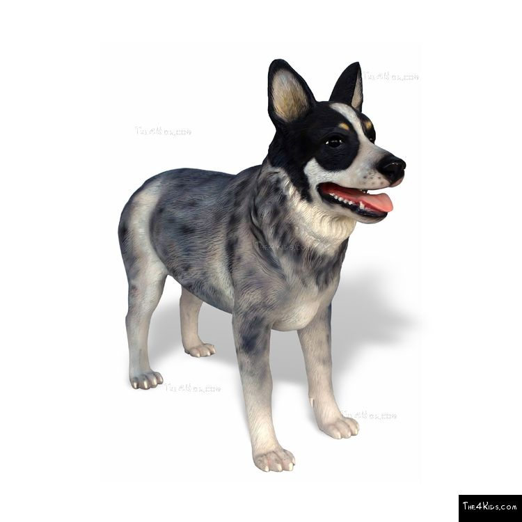Image of Blue Heeler