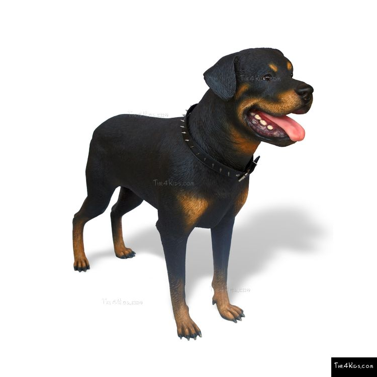 Image of Rottweiler