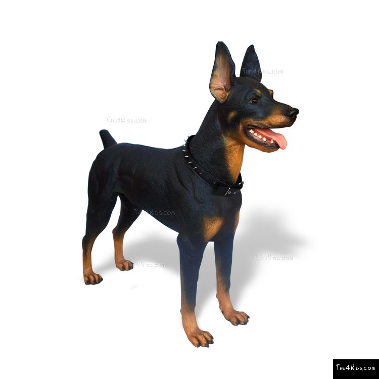 Image of Doberman