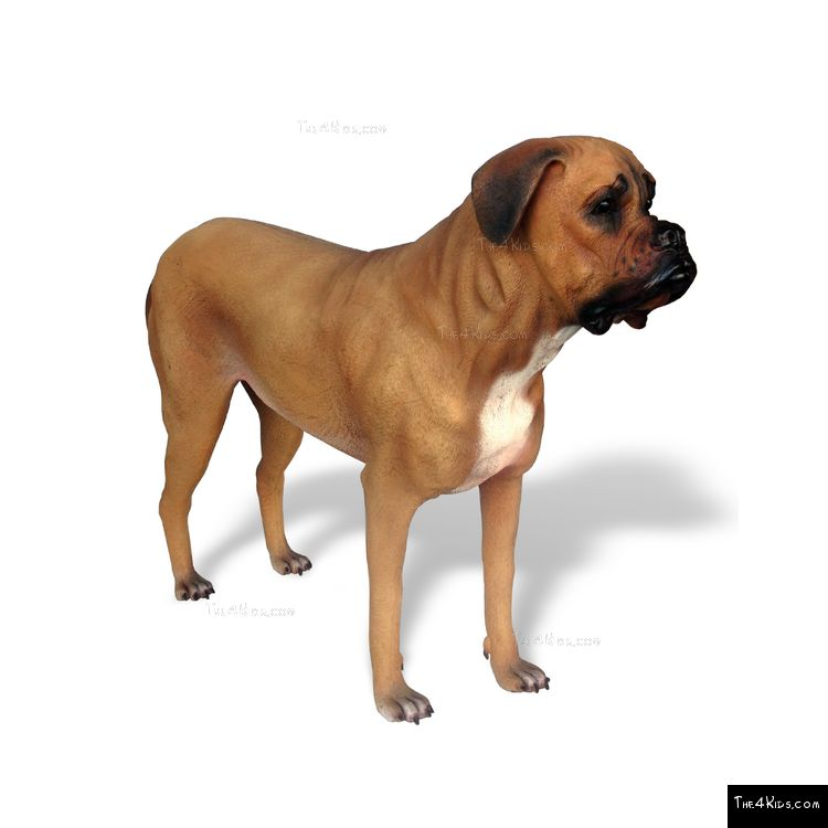 Image of Mastiff