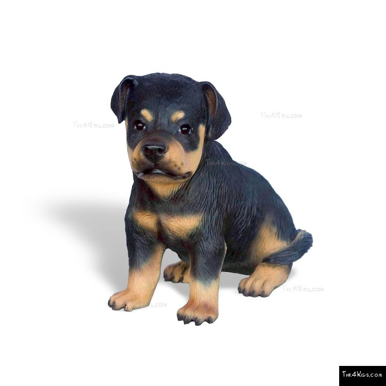 Image of Rottweiler Pup