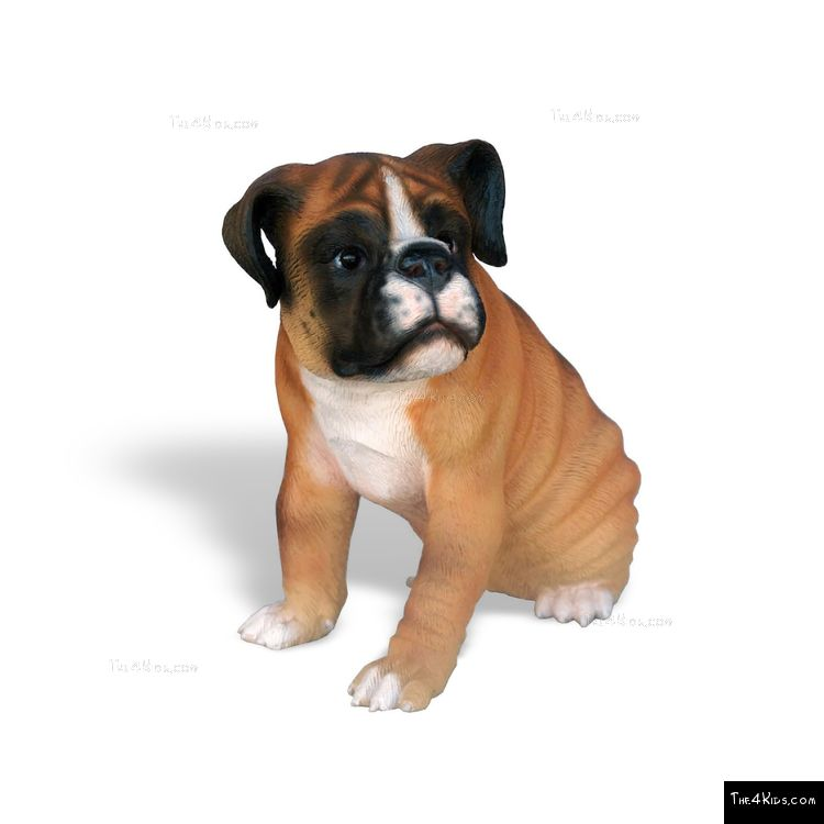 Image of Boxer Pup